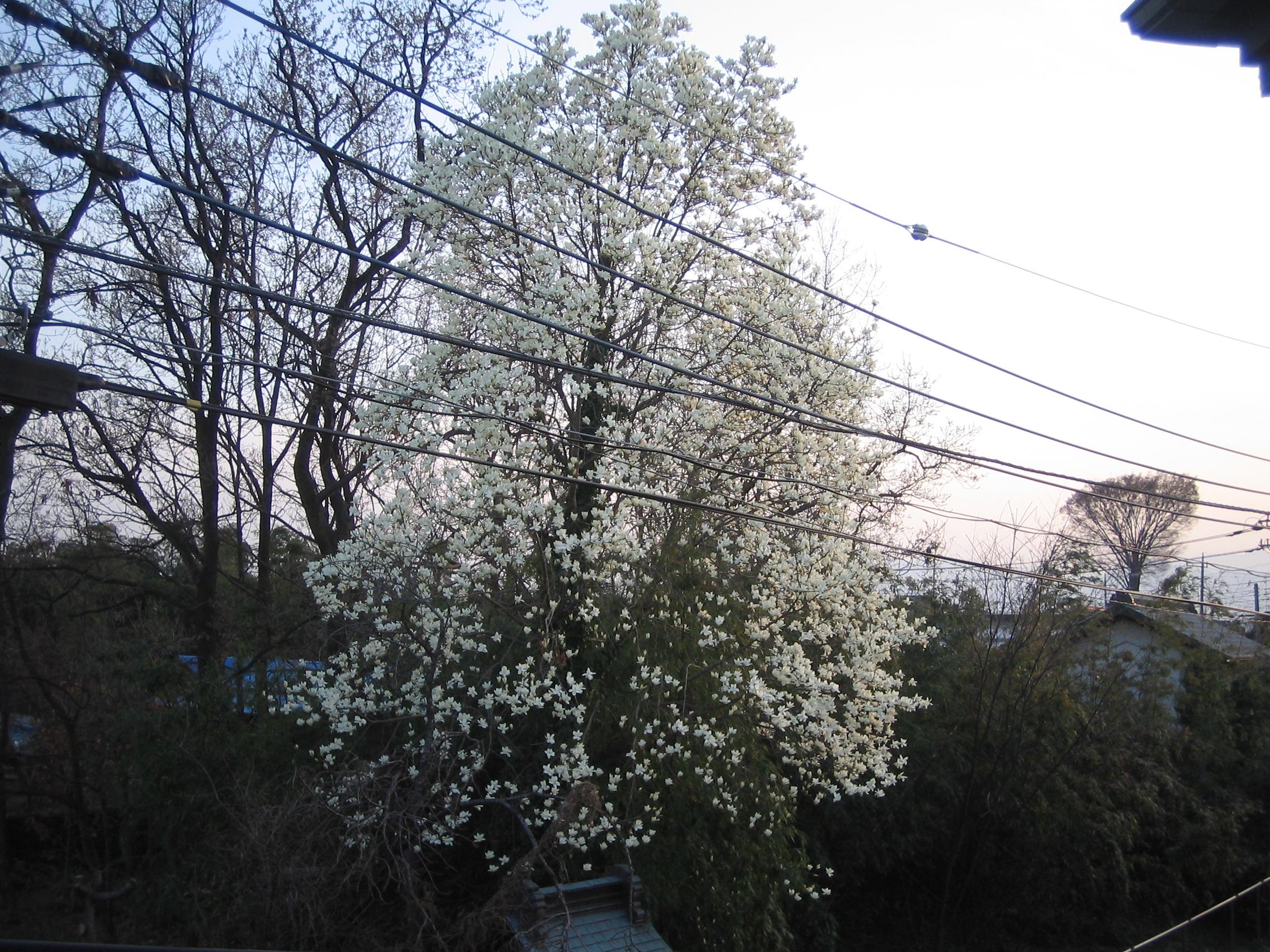 20084_007